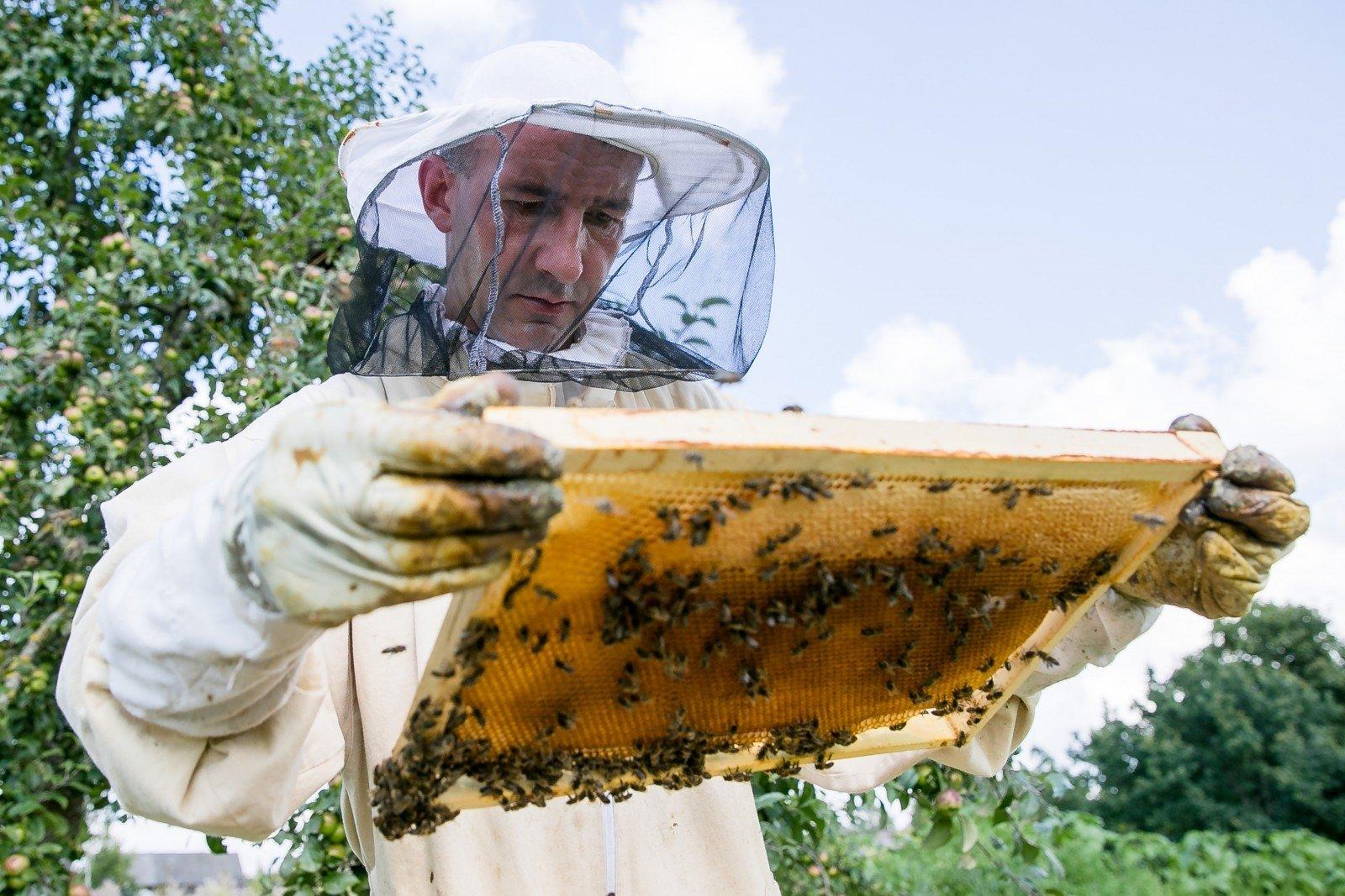 medaus bičių ai prekybos sistema