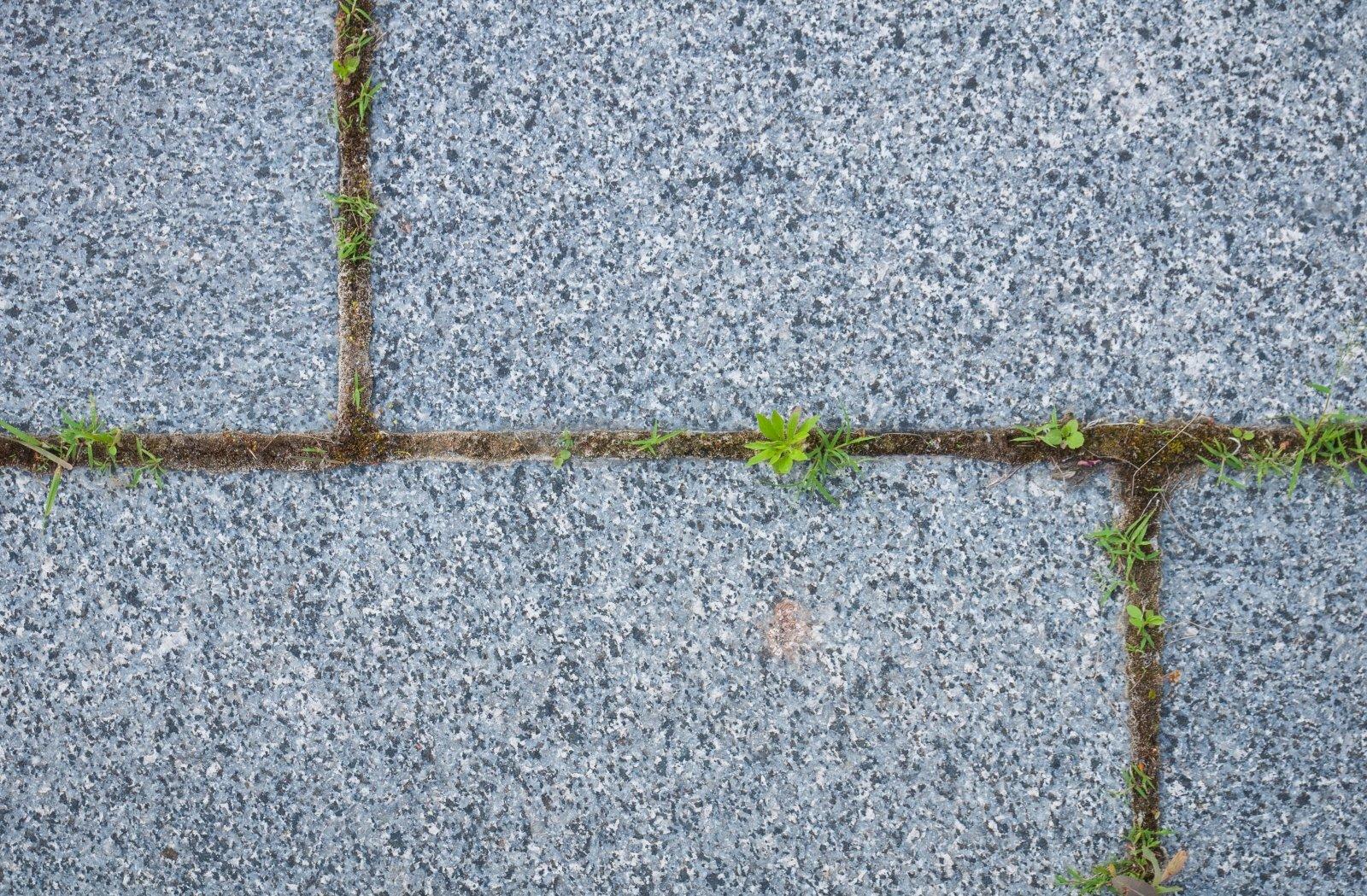 žolės, naudingos erekcijai)