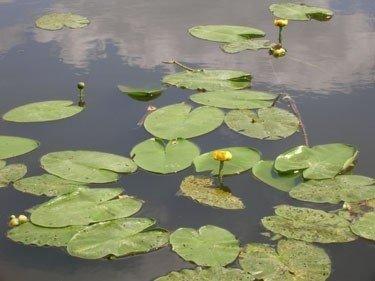 Ežero būklę tiriantys mokslininkai daug ką sužino iš vandens augalų būklės