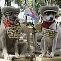 Šunys Habagatas ir Bagwis, dantyse laikydami aukoms skirtus krepšelius, ilsisi po gatvėje surengto pasirodymo.