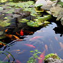 Kęstučio Ptakausko japoniškas sodas Alytuje_4