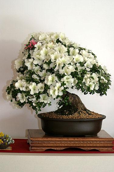 II bonsai paroda Alytuje_3