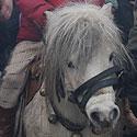 Poni, Sartai, žirgų lenktynės, Dusetos