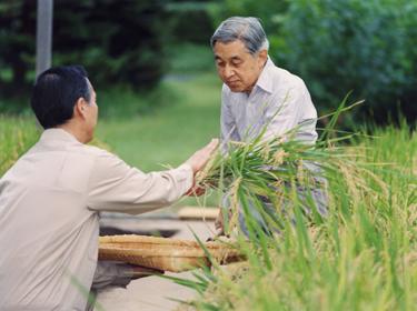 Japonijos imperatorius Akihito ryžių lauke