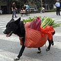 Šuo neša daržoves