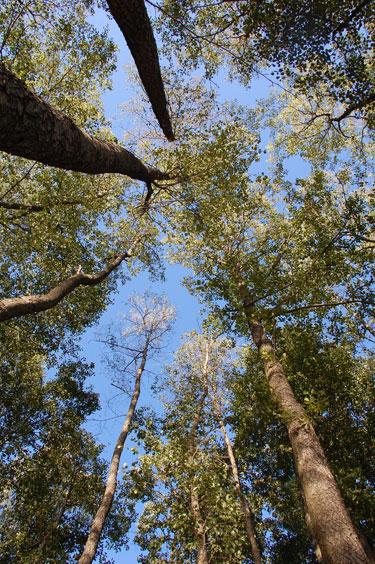 Medžiai, miškas