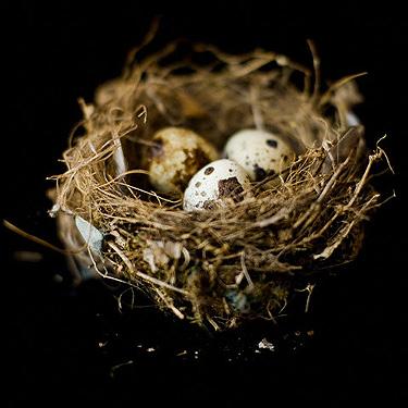 Kiaušiniai, lizdas