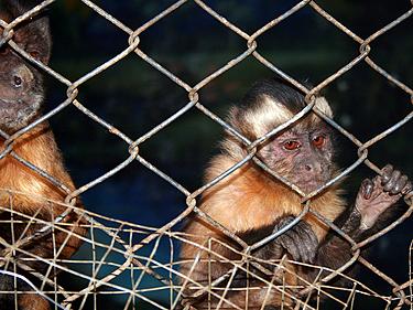 Peru,  Zoologijos sodas