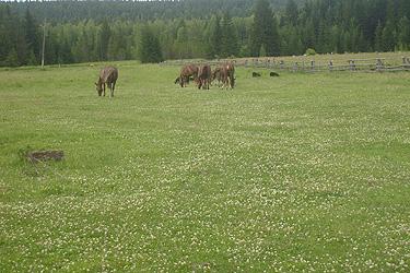 Arkliai Sibire