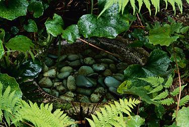 Vanduo sode, šaltinėlis