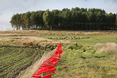 Raudonomis vėliavėlėmis aptverta ganykla