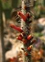 Kaktusai_19