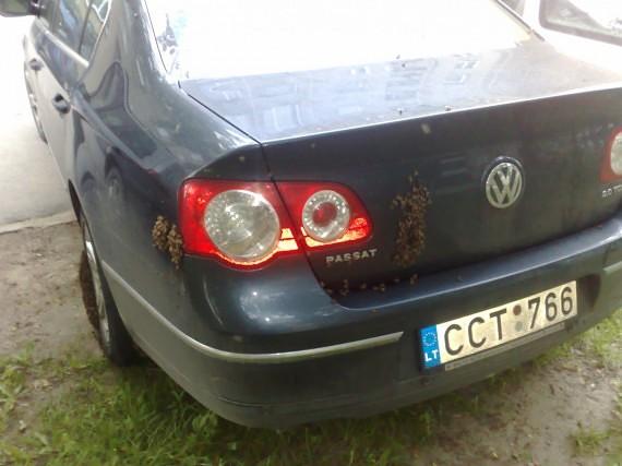Bičių spiečius susimetė ant mažeikiškio mašinos