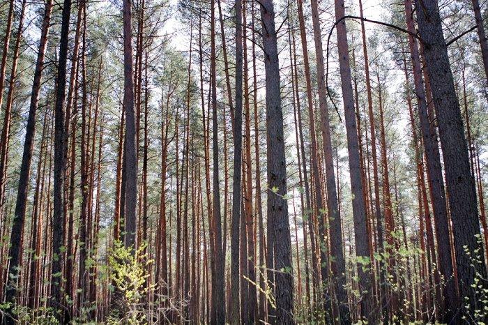 Девушка привязана в лесу фото фото 179-542