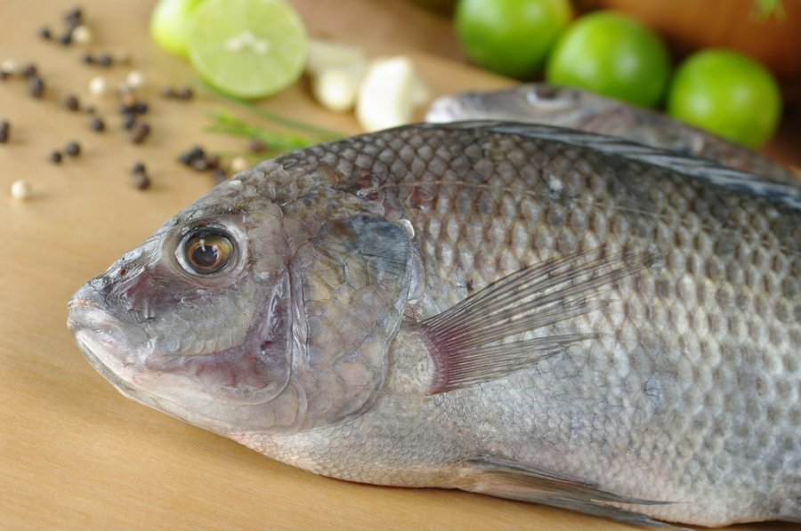 Ką būtina žinoti pirmą sykį gaminantiems žuvį