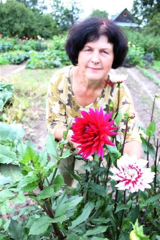 Vilnietė augina beveik pusę tūkstančio jurginų veislių