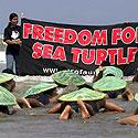 Laisvę jūrų vėžliams - kampanija už gyvūnų teises