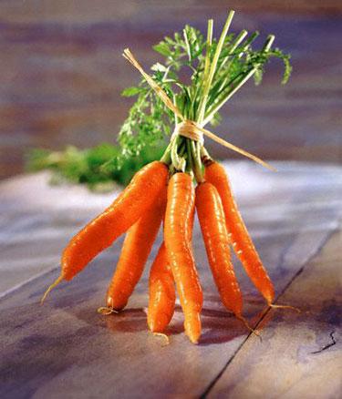 Morkos, daržovės
