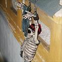 Prie pastato sienos pritvirtinti griaučiai