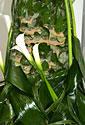 Floristinė stilizuota eglutė_17