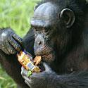 Šimpanzė
