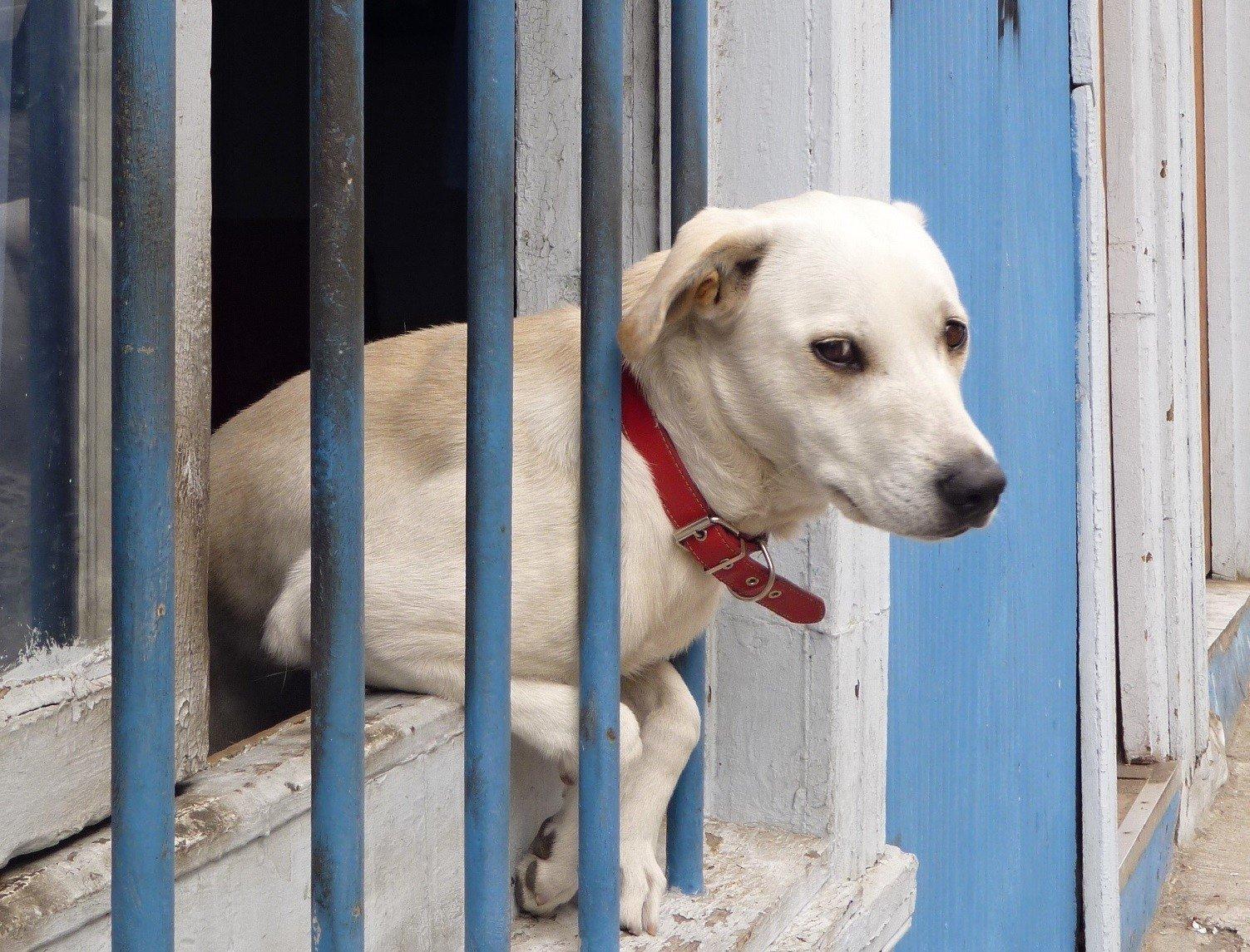 Вподмосковной Ивантеевке отыскали свалку изтрупов собак