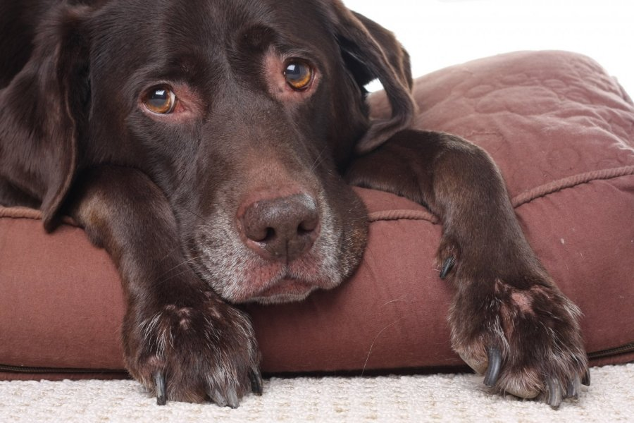 Suns nosis sausa