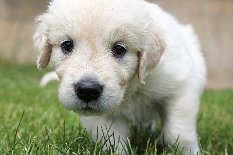 vitaminai šunų širdies sveikatai kaip nugalėti hipertenziją knyga