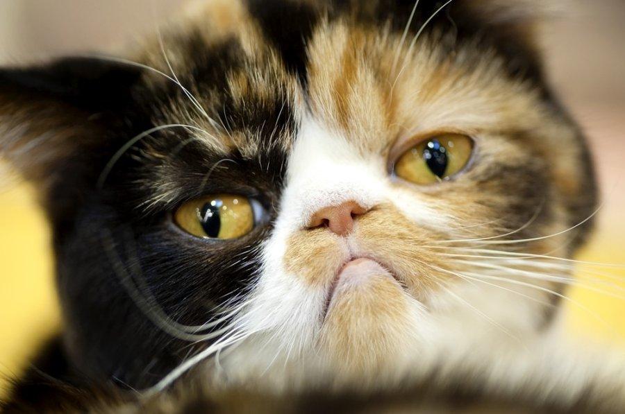 geriausia investuoti kriptovaliutą prekiautojas kačių kriptografija