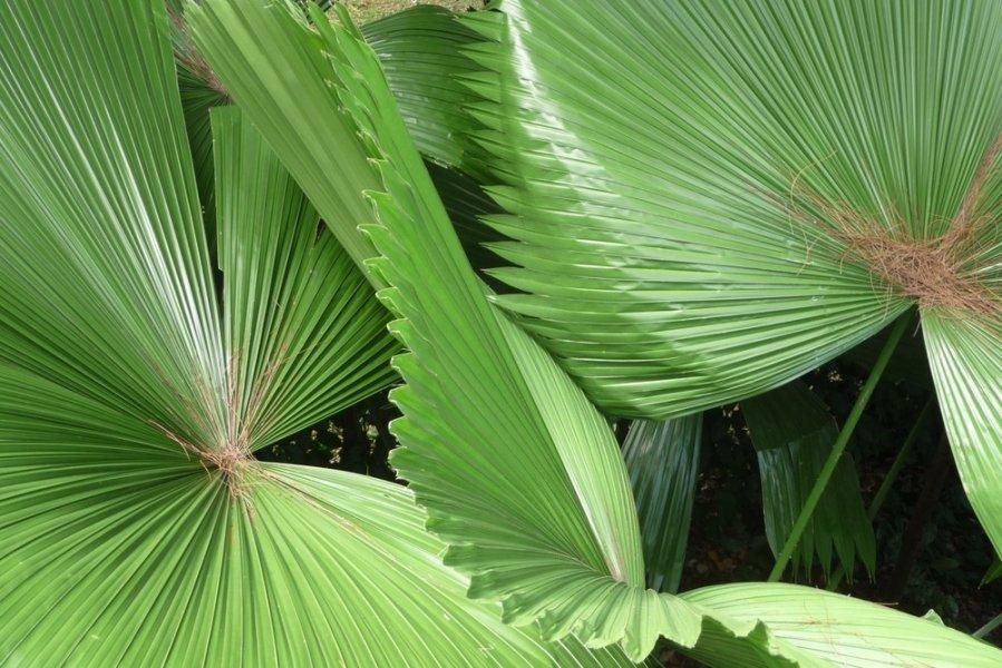 Ziediniu augalu lapu dydis