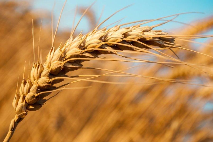 Дворкович: Российская Федерация несобирается возвращать экспортную пошлину напшеницу