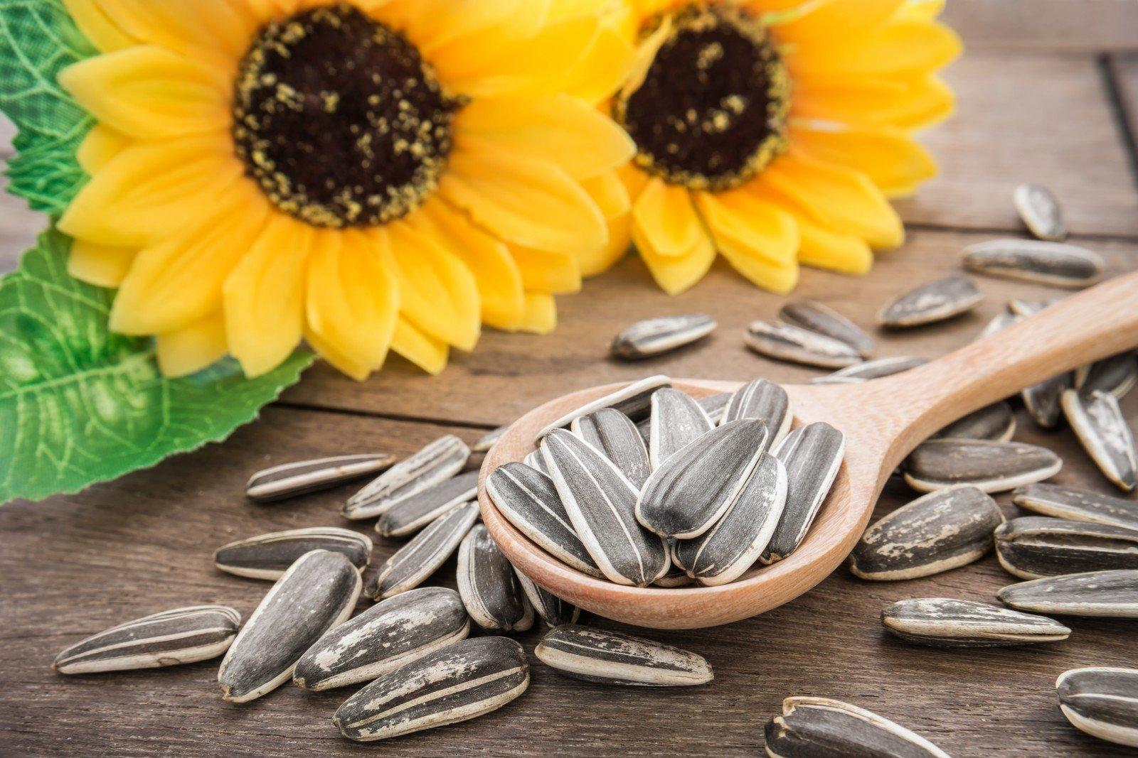 saulėgrąžų sėklos nuo hipertenzijos galvos masažas sergant hipertenzija