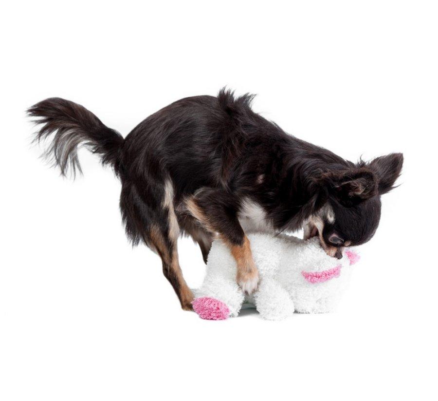 Kodėl šuo imituoja lytinį aktą su jūsų koja - DELFI Letena