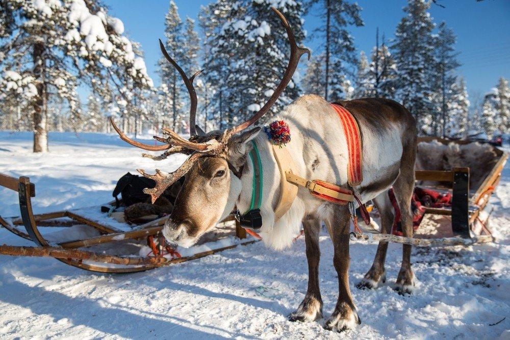 Погранслужба РФ непропустила через российско-финскую границу автобусы компании Lux экспресс