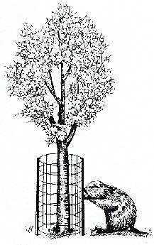 Tokios tvorelės galėtų apsaugoti konkrečius medžius